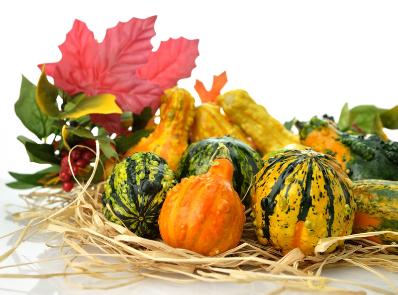 Small Colorful Gourds Collection With Autumn Leaves