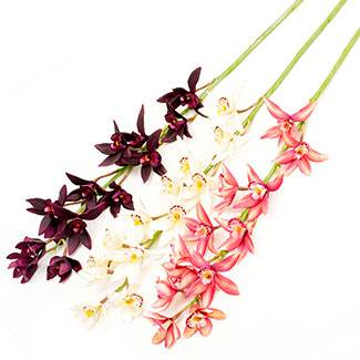 orchid_burgundy